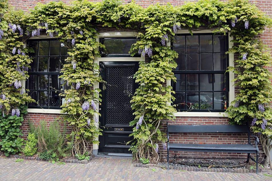 Dark Purple Glass Door Covered in Wisteria Plants