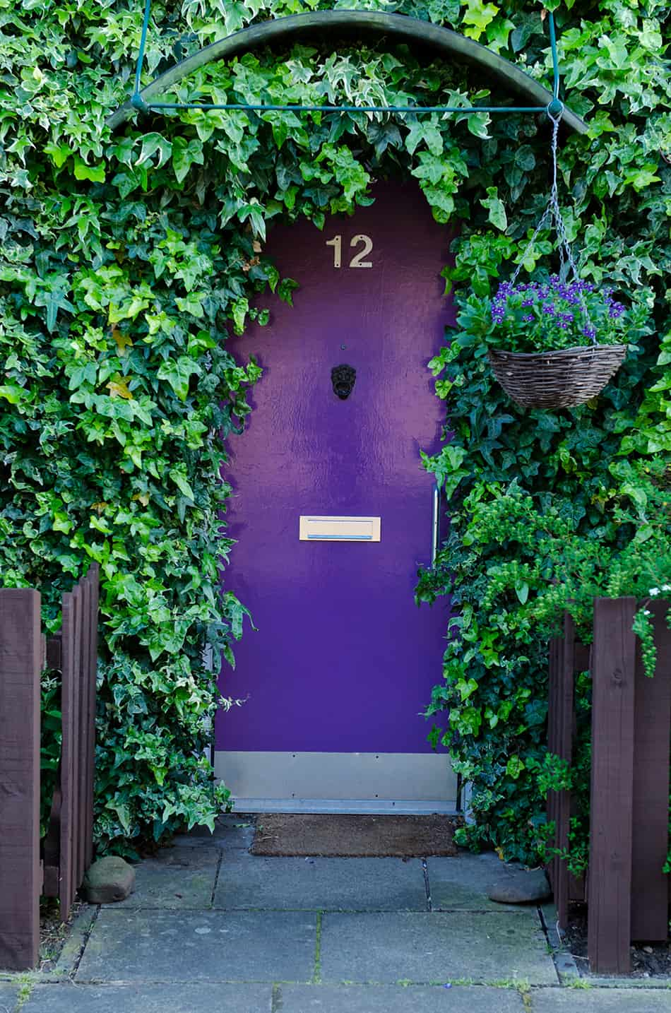 Purple Door Decorated with Hanging Plants