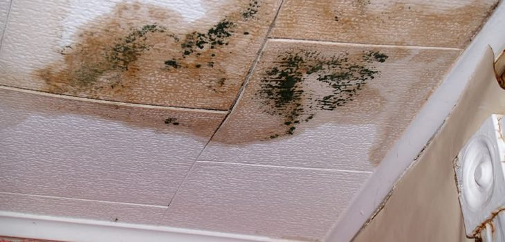 Common Causes of Water Stains on Ceiling & How to Fix Them