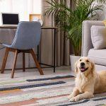 Pet Safe Carpet Deodorizer